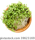 White mustard microgreen in wooden bowl over white 39623169