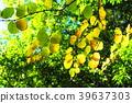 tender green, verdure, tree 39637303