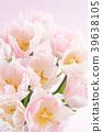 郁金香 花朵 花卉 39638105