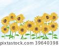 sunflower, sunflowers, summer 39640398