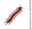 Millipede insect spiral pattern color silhouette 39645893