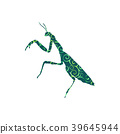 Praying mantis insect spiral pattern color 39645944
