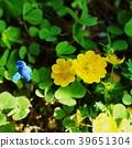 ดอกไม้และสี่เหลี่ยมสวยของ Kijimashiro ที่ต้องทนทุกข์ทรมานจากดอกไม้ป่าในฤดูใบไม้ผลิงูและอื่น ๆ 39651304