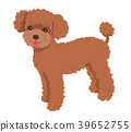 Poodle red 39652755