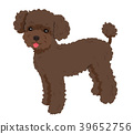 Poodle brown 39652756