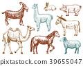 Farm Cute Animal big set. Vector illustration 39655047