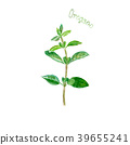 oregano, watercolor, herb 39655241