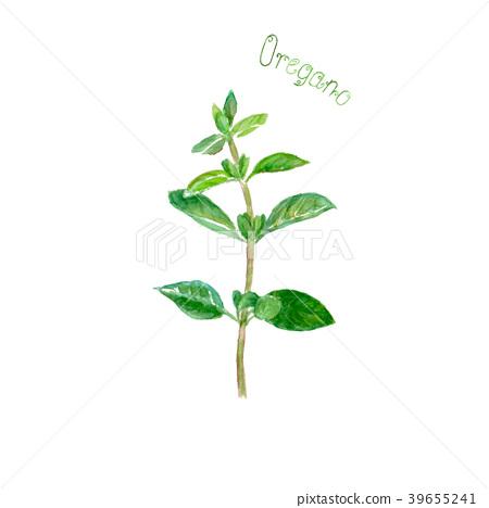 Oregano herb spice isolated on white background 39655241