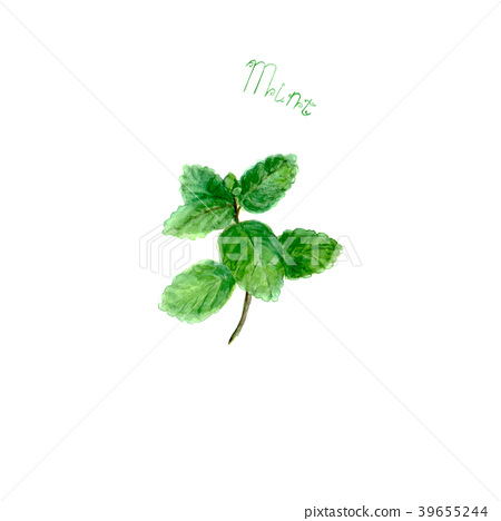 Mint herb spice isolated on white background 39655244