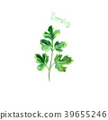 Parsley herb spice isolated on white background 39655246