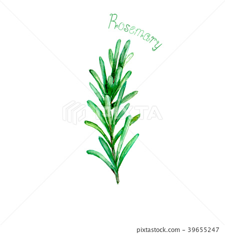 Rosemary herb spice isolated on white background 39655247