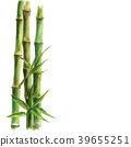 Green bamboo plants isolated on white background 39655251