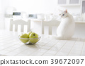 Kitchen cat 39672097
