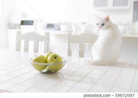 厨房猫 39672097
