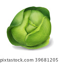 Cabbage, vector object 39681205