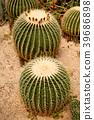 Cactus Mexicon 39686898