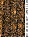 Working bees on the honeycomb with sweet honey  39687236