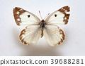 Butterfly specimen korea, 39688281
