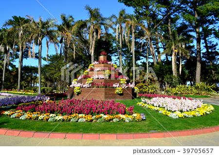 Miyako Botanik Garden Aoshima(宫崎县立Aoshima亚热带植物园)充满热带气息的植物园 39705657
