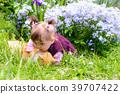 花朵 花 花卉 39707422