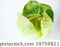 양배추, 야채, 채소 39709821
