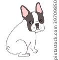 สุนัข,สุนัช,เฟร์นช์บูลล์ดอก 39709850