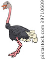 ostrich bird animal character cartoon 39710609