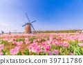 튤립 밭, 봄, 동아시아 39711786
