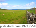 Stone wall in Scottish countryside 39717558