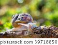 Springtime. Macro shot of a snail in a garden 39718850