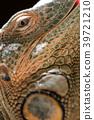 鬣蜥蜴 爬行動物 爬蟲類的 39721210