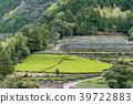 tea plantations, tea plantation, tea field 39722883