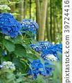 수국, 꽃, 대나무숲 39724416