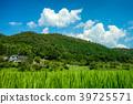 summer, grass, field 39725571