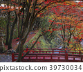 가을, 단풍, 쇼소인 39730034