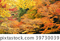 가을, 단풍, 미노 39730039