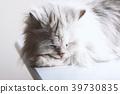 แมวนอนหลับ 39730835