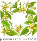 vanilla vector frame 39731234