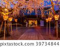 밤 벚꽃, 벚꽃, 라이트업 39734844