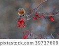 吃花揪果子的甲虫 39737609