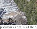 Squirrel in Yosemite National Park 39743615