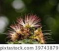 꽃, 식물, 복사 공간 39743879