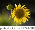 꽃, 여름, 식물 39744000