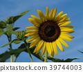 푸른, 노랑, 꽃밭 39744003