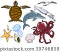 夏天海生物例證集合 39746839