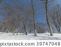 beech, forest, 100 39747048