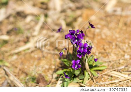 Violet, Gwangju, Jeonnam 39747355