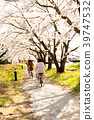 Cherry blossom park and road. Riding bicycle  39747532