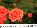 สวนดอกไม้ฤดูใบไม้ผลิ 39748070