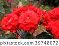 สวนดอกไม้ฤดูใบไม้ผลิ 39748072